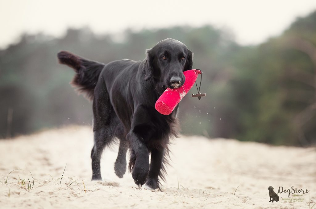 Ras Spotlight Deel 10 - De Flatcoated Retriever
